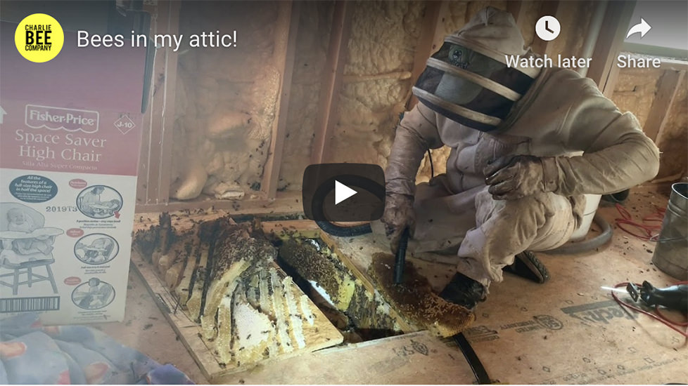I got bees in my attic!