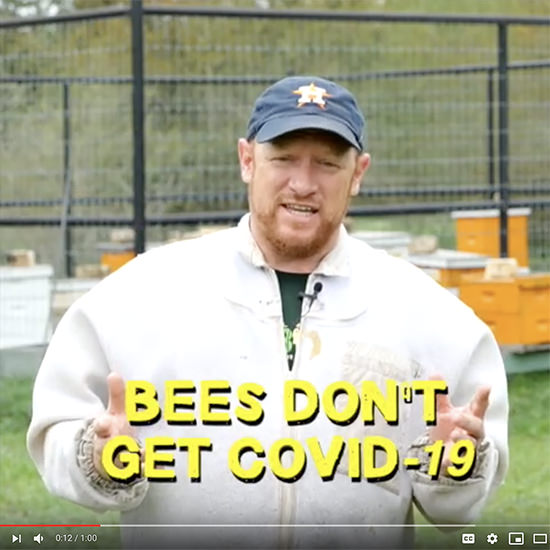 "Image of Charlie the Beekeeper standing in apiary with text on screen reading: ""Bees don't get COVID-19"""