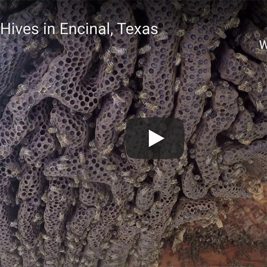 Four Hive Removals in One Day