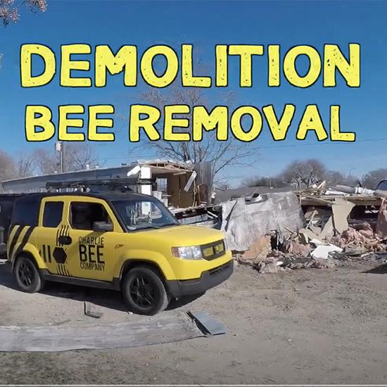 Demolition Bee Removal