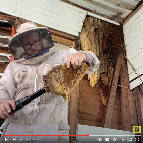 New Braunfels Bee Removal – August 2021