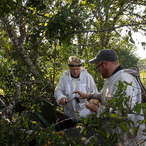 Central Texas beekeeper saves one hive at a time by building new homes for pollinators
